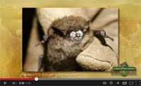 Help Endangered Bats