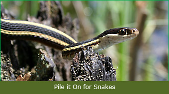 Pile it On for Snakes