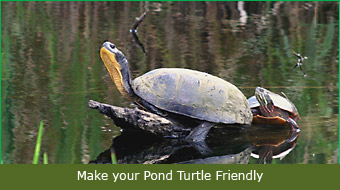 Make your Pond Turtle Friendly