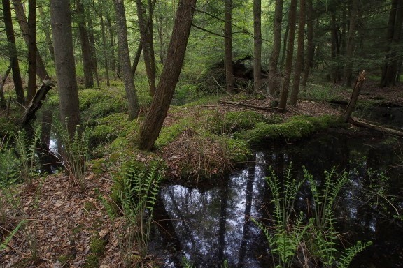 Donation of a significant property to Long Point Basin Land Trust helps slow the decline of wetlands in Norfolk County